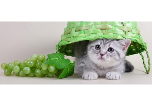 11 опасных продуктов для кошек