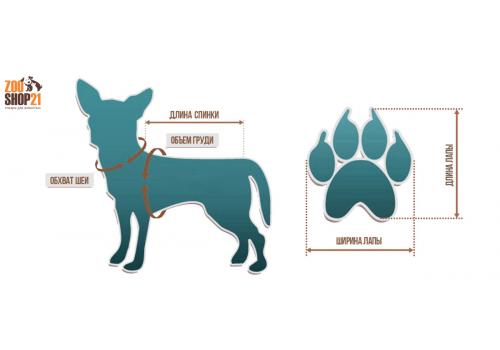 Как правильно подобрать собаке размер одежды и обуви?