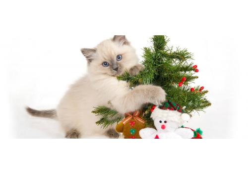 Новый год: 5 праздничных опасностей для кошек
