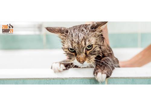 Как правильно мыть кошек
