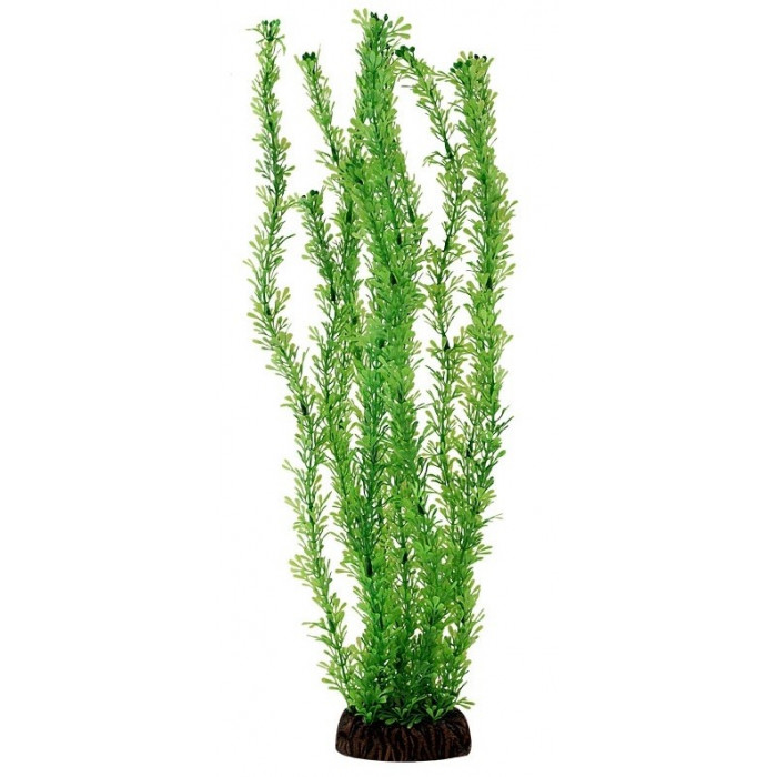 Растение Лигодиум зеленый, 10 см