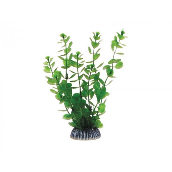 """Растение 1990 """"Бакопа"""" зеленая, 200 мм"""