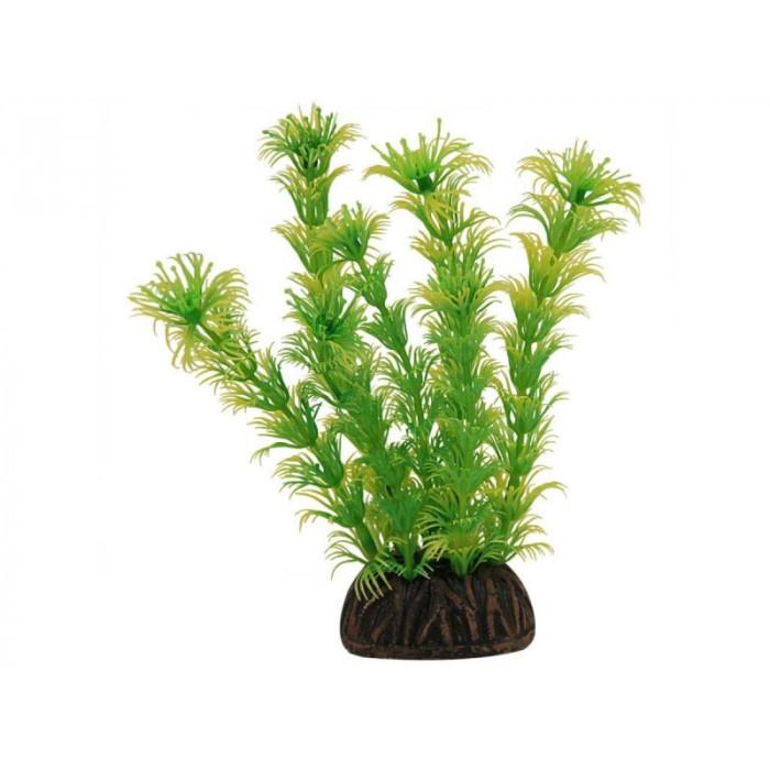 "Растение 1367 ""Амбулия"" жёлто-зеленая, 130 мм"