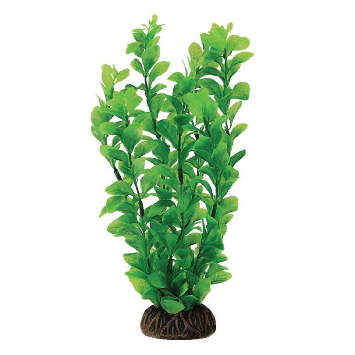 """Растение """"Людвигия"""" зеленая, 200мм"""