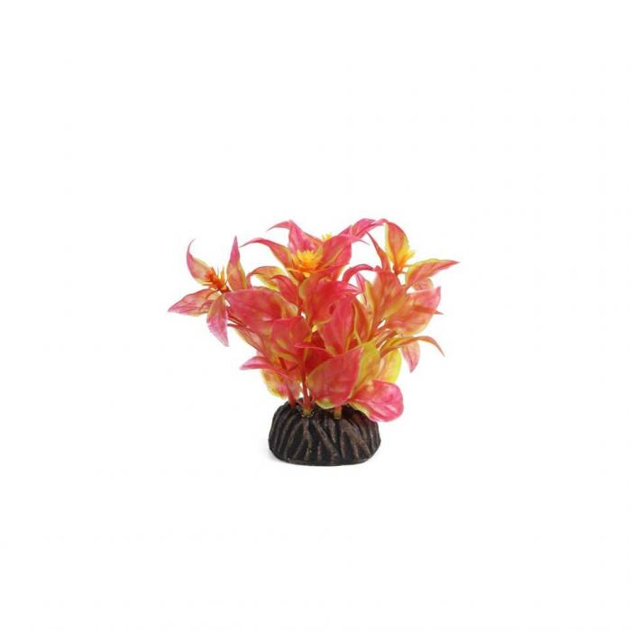 """Растение 0805 """"Альтернантера"""" красная, 80 мм"""