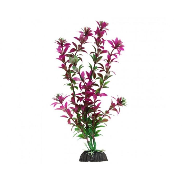 Растение Ротала сиреневая, 40 см